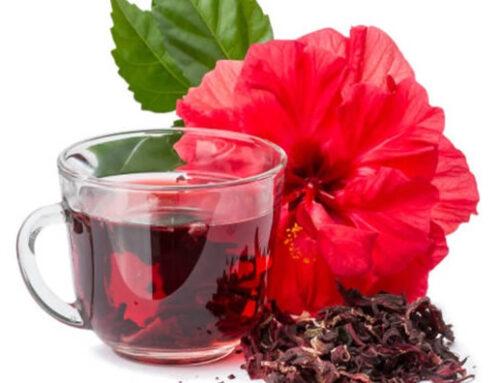 Hibiscus Tea and its Major Health benefits
